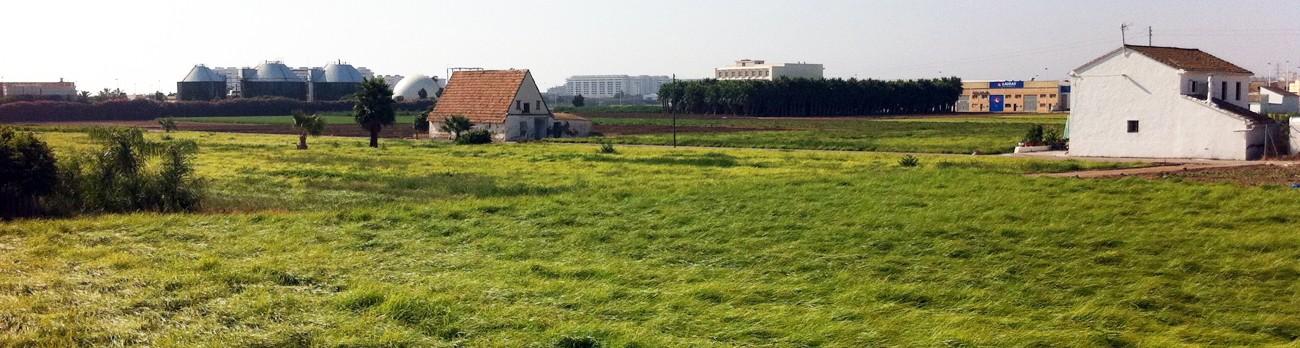 Campo de Chufas en Alboraya